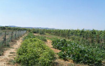 """Al centro """"La Tartaruga"""" un workshop su orti sinergici e nuove coltivazioni"""